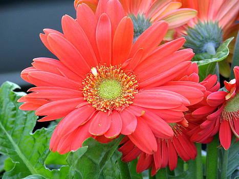 Red Flower by Paul Schoenig