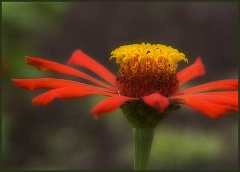 Red Flower  by Teresa Moore