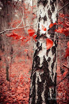 Hannes Cmarits - red forest
