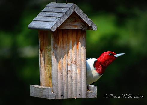 Red head by Terri K Designs