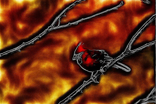 Karol  Livote - Red Hot Cardinal