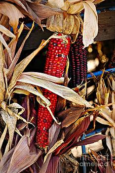 Red Indian Corn by Kathleen Struckle