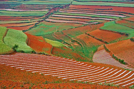 Red Land 07 by Jason KS Leung