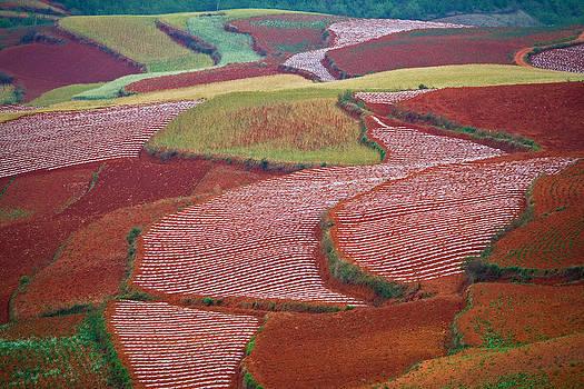 Red Land 08 by Jason KS Leung