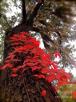 Red Leaf by AR Annahita
