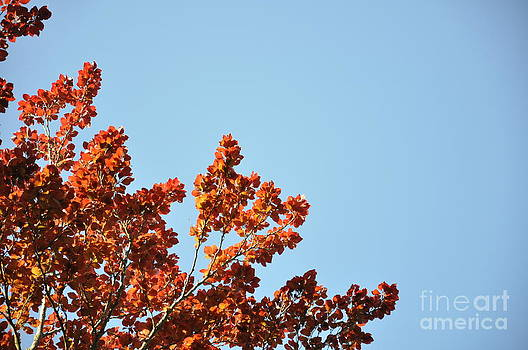 Red Leaf Tree 3 by Anatoliy Tarasiuk