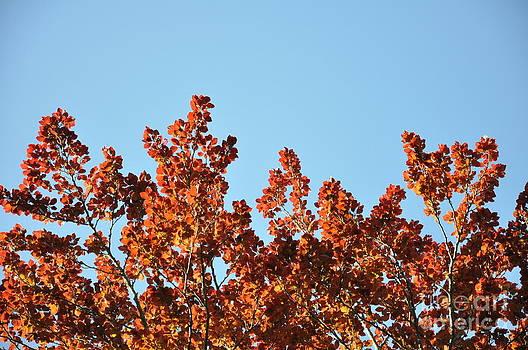 Red Leaf Tree 4 by Anatoliy Tarasiuk