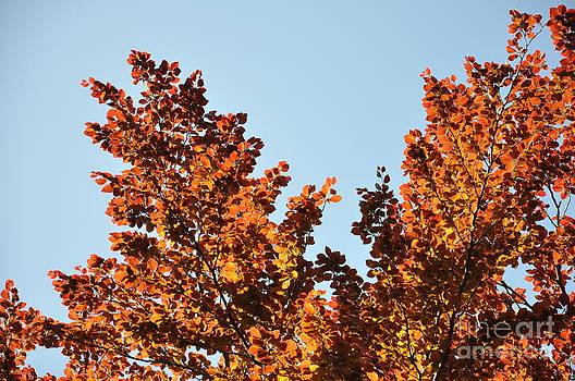 Red Leaf Tree 5 by Anatoliy Tarasiuk