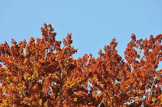 Red Leaf Tree by Anatoliy Tarasiuk