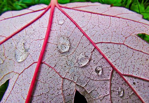 Red Leaf With Raindrops by Eva Kondzialkiewicz