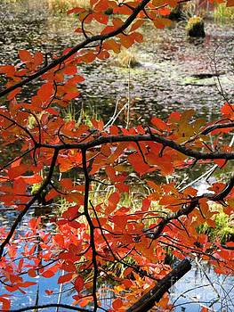 Red Leaves by the Pond by Linda Marcille