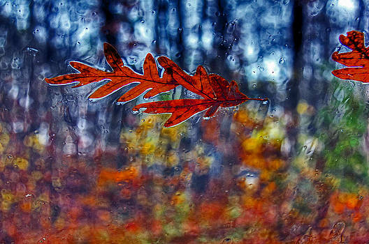 red leaves on windshield Dry Brush by Andy Lawless