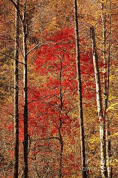 Red Leaves by Patrick Shupert