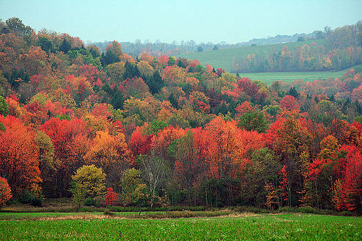 Red Maples by David Simons