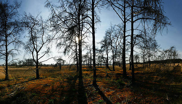 Red Moss by Erik Tanghe