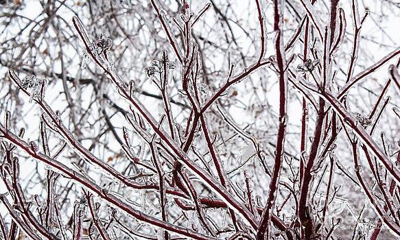 Barbara McMahon - Red Osea Dogwood Sporting Ice Coat