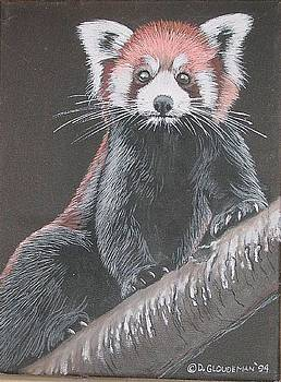 Red Panda by Denis Gloudeman