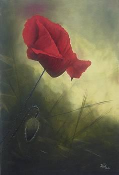 Red Poppy Flower  by Beata Rosslerova
