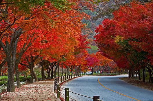 Red Road by Jason KS Leung