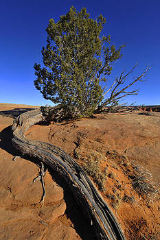 Red Rock Country by David Marr