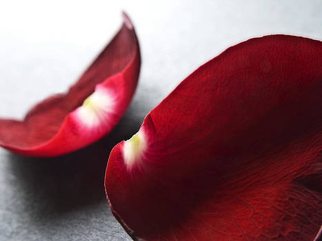 Red Rose Flower Petals Abstract II - Closeup Flower Photograph by Artecco Fine Art Photography