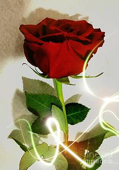 Red rose with light by Rose Wang