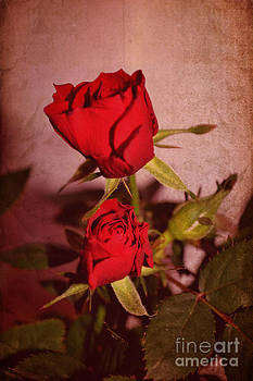 Red roses by Nadeesha Jayamanne