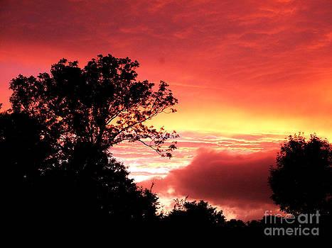 Joe Cashin - Red sky at night