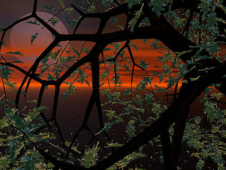 Red Sky by Michele Wilson