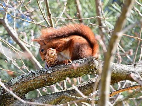 Bishopston Fine Art - Red Squirrel at Lunch