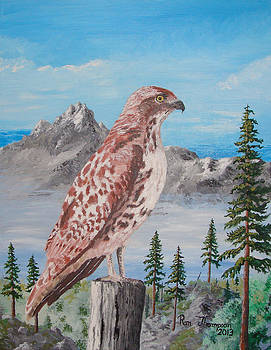 Red Tail Hawk by Ron Thompson