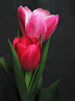 Red Tulip Pair by James Bullard