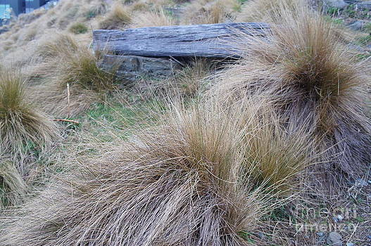 Red Tussock by Therese Alcorn