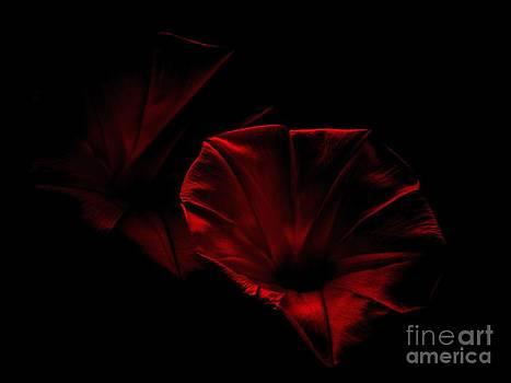 Red Velvet Morning Glory by Charleen Treasures