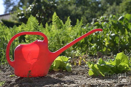 Red watering can in vegetable garden by Sami Sarkis