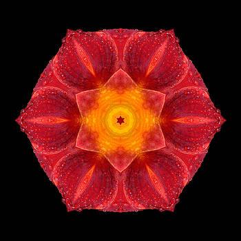 Red Wet Lily Flower Mandala by David J Bookbinder