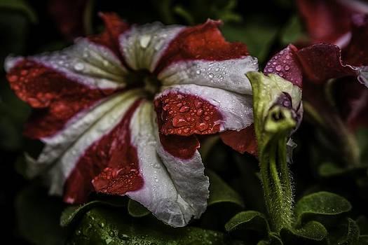 Red White and Green by Edward Khutoretskiy