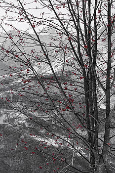 Red Winter by Sonny Marcyan
