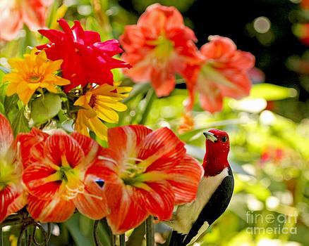 Redheaded Woodpecker and Amaryllis by Luana K Perez