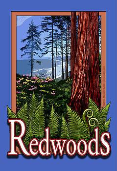 Redwoods in California by Michelle Scott