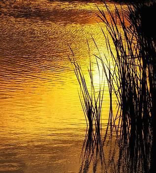 Reeds at Sunset by Nancie Rowan