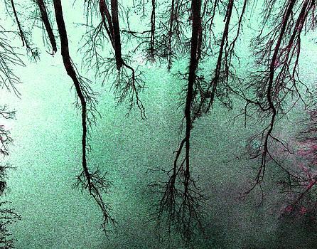 Reflected Trees by Joseph Tese