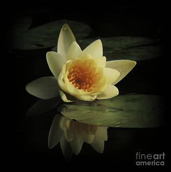 Reflecting Yellow Waterlily by Kim Doran