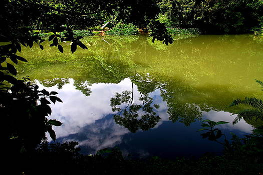 Reflection by Arie Arik Chen