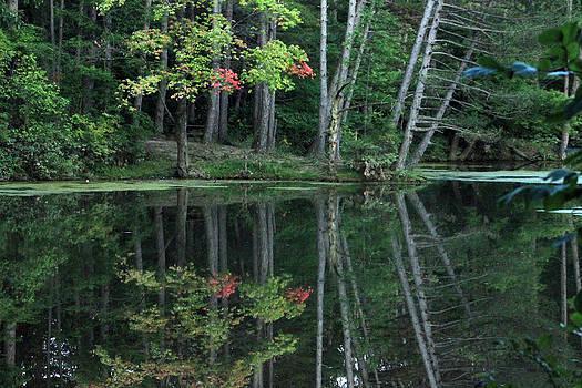 Reflection by Bruce Patrick Smith