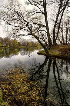 Oleksandr Maistrenko - Reflection