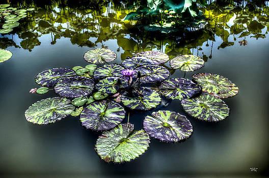 Reflections by Daniel  Gundlach