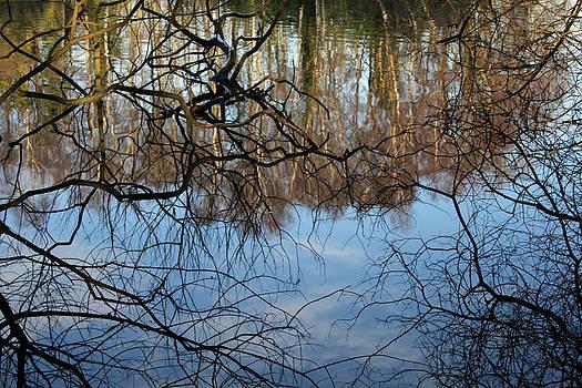 Reflections by Derek Sherwin