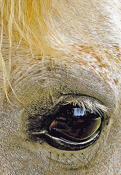 Reflections in a Horses Eye by Don Bangert