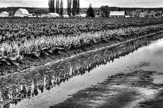 Reflections in Black and White by Brian Xavier
